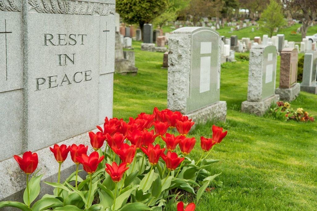 Tulips beside the headstone