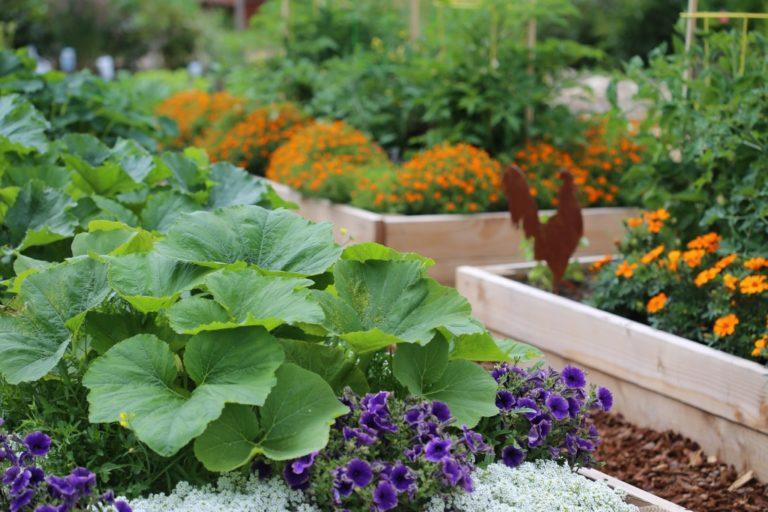 vegetable and flower garden