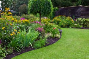 Green lawn in a colorful landscaped formal garden