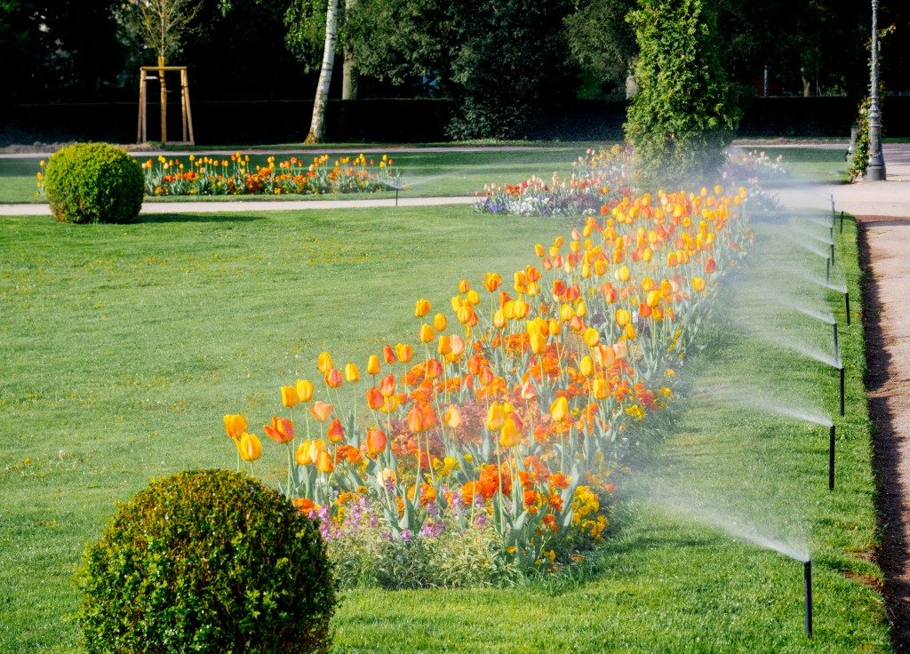 Sprinklers watering flowers