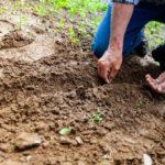 senior planting seeds