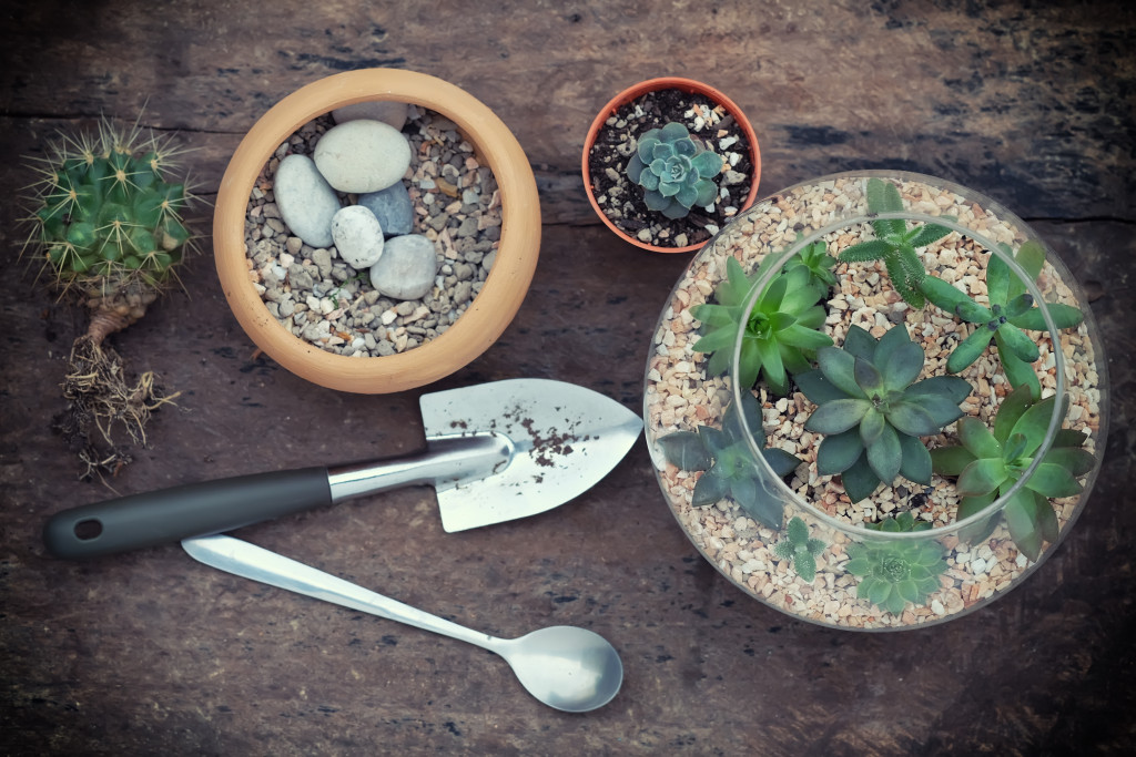 Terrarium bottle,Planted in the small garden with cactus and Miniature succulent plants