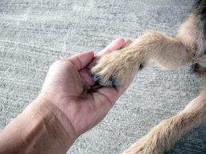 pet foot